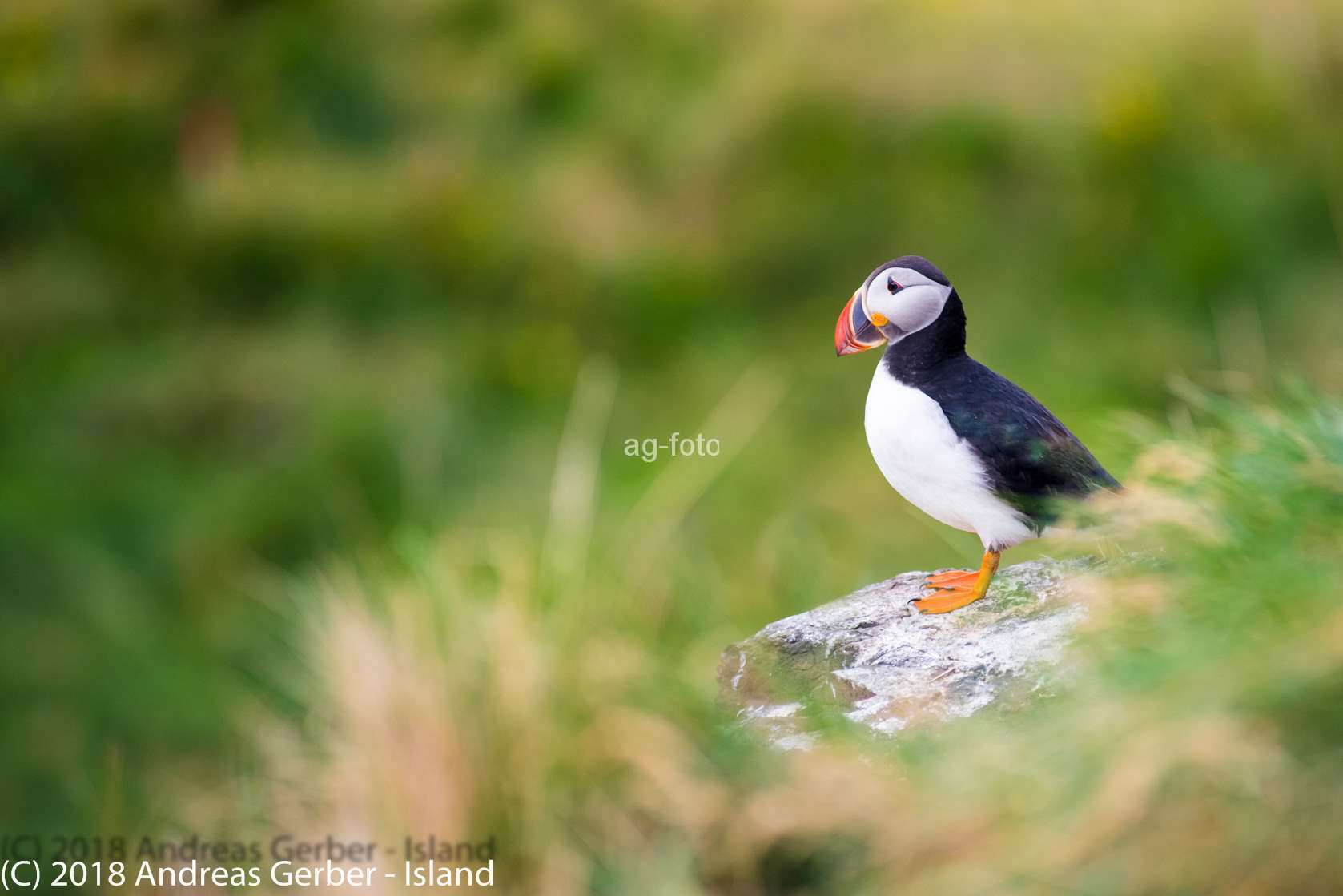 Puffin Island (C) 2019 Andreas Gerber